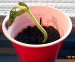 Plant 1: light & water